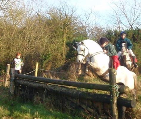 The Welsh Pony | Irish Pony Society